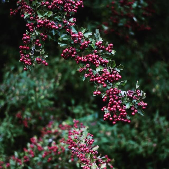 Hello Autumn ! nature photo red autumn september jesiennie wrzesie