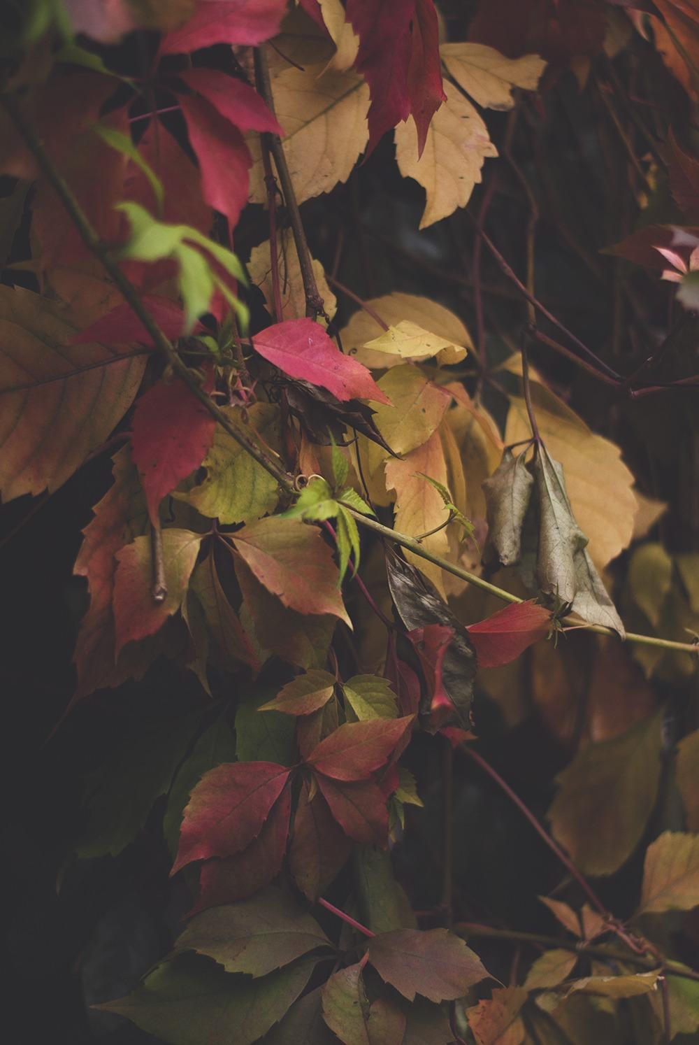 autumnbristol