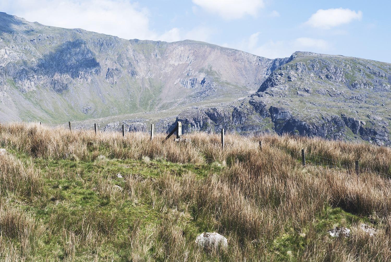Walia Snowdonia