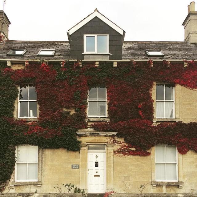 Natural bushes house autumnleaves walk natura domu jesie