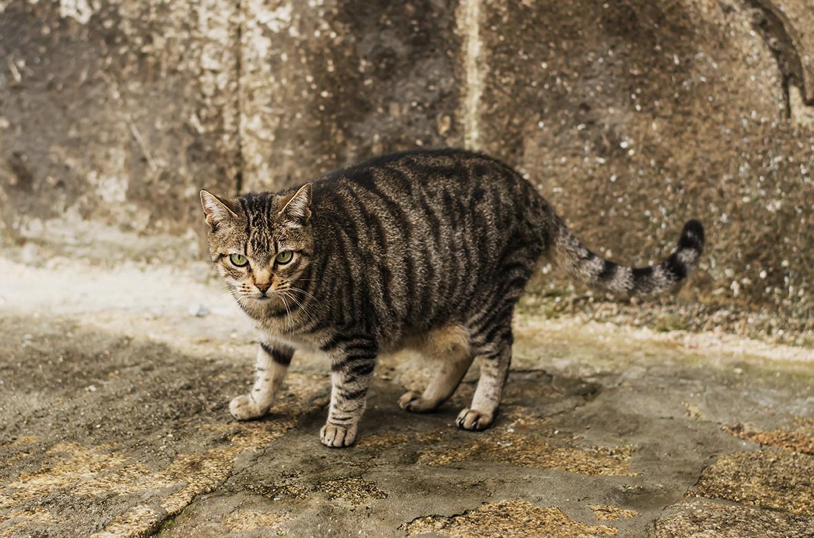 kot w porto