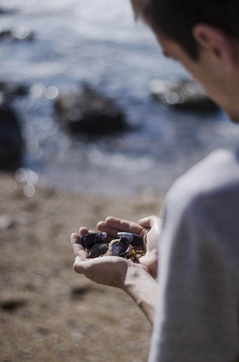 Porto zbieranie muszelek