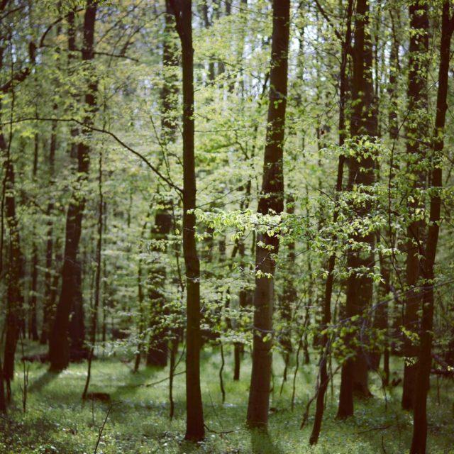 Miedzydrzewie laspilczycki wrocaw drzewo leneopowieci woods tree forest poland